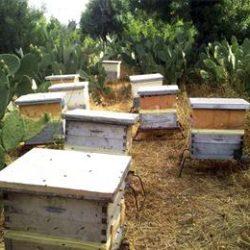 غرامة تصل( 500-1000 ريال عماني)،  من ينقل خلايا النحل من والى ولايتي صلالة وطاقة